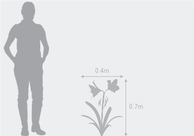 Eventual height and spread