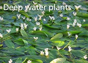 Deep water plants