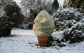 Protect young plants from the chill