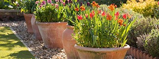 Back in stock: Terracotta pots