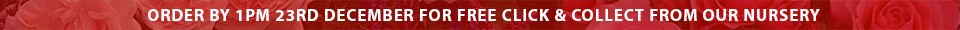 Order by 1pm 23rd December for FREE click & collect from our nursery
