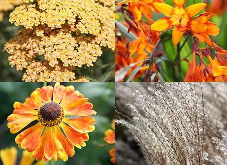 Border of the month - Brilliant orange