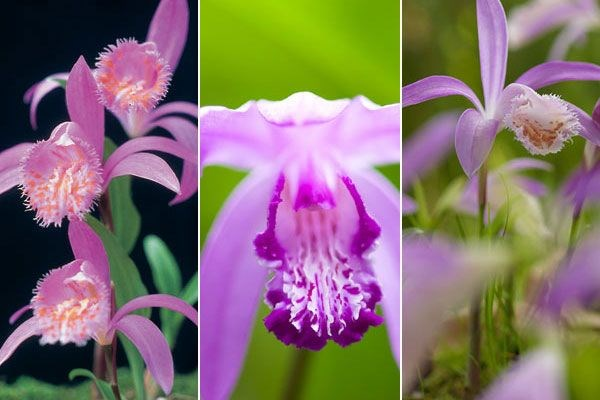 Colourful outdoor orchids chosen by plant buyer John Hiorns