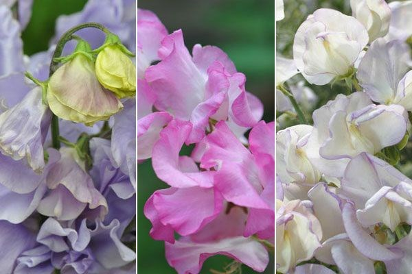 John Hiorns chooses the best bulbs for six months of colour