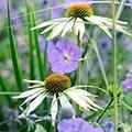 Cool tones plant combination