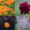 Dry Sun Plant Combination