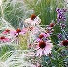create a praire plant combination