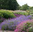Wisley border collection