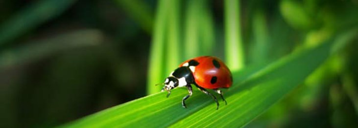 How to encourage beneficial insects
