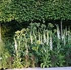 Woodlan garden style