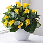 Calla captivated yellow