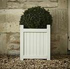 Buxus sempervirens and wooden planter combination