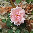 http://www.crocus.co.uk/images/products2/PL/00/00/00/12/PL0000001273_list.jpg
