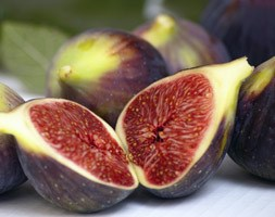 fig 'Brown Turkey' (fig)