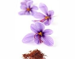 Crocus sativus (saffron crocus bulbs)
