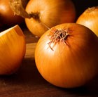 Onion Stuttgarter Giant