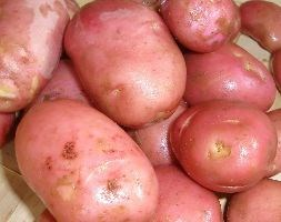 potato 'Desiree' (potato - early maincrop Scottish basic seed potato)