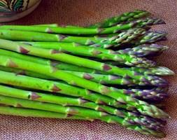 Asparagus 'Connover's Colossal' (asparagus crowns)