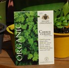 chervil - organic curled