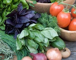 Summer Salads Collection (vegetable plug plant collection)