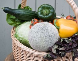 The Greenhouse Collection (vegetable plug plant collection)