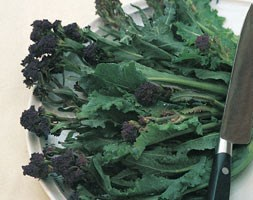 broccoli - late purple broccoli