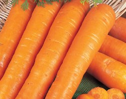 carrot 'Early Nantes' (carrot)