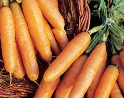 carrot 'Amsterdam Forcing' (carrot)