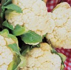 cauliflower Igloo
