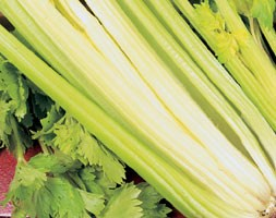 Celery 'Golden Self Blanching' (celery)