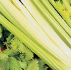 celery Golden Self Blanching Aurora
