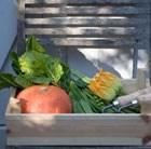 vegetable plug plant collection