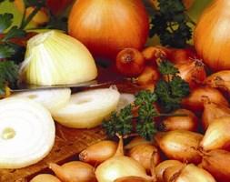 onion 'Senshyu Semi-globe Yellow' (onion sets)