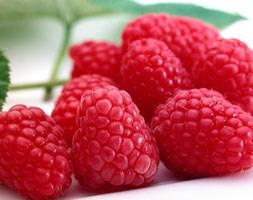 raspberry 'Tadmoor' (PBR) (raspberry - autumn fruiting)
