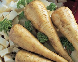 parsnip 'Tender and True' (parsnip)