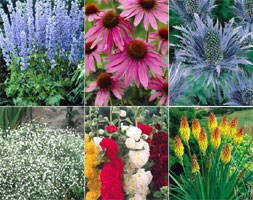 bargain perennial collection
