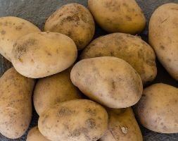 potato 'Swift' (PBR) (potato - first early, Scottish basic seed potato)