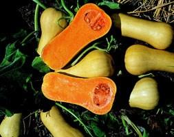 Squash 'Butternut' (butternut pumpkin)