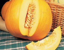 pumpkin 'Jack O'Lantern' (pumpkin)