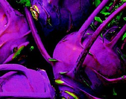 Kohl rabi 'Purple Delicacy' (kohl rabi)
