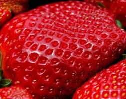 Strawberry 'Delia' (strawberry - early - mid season fruiting)