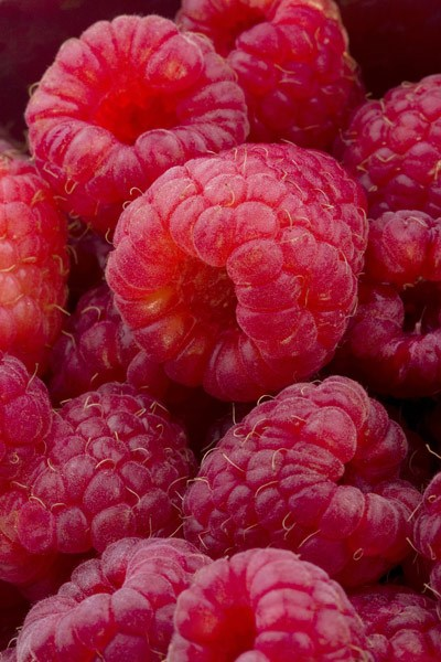 raspberry - primocane (mainly autumn fruiting)