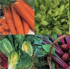 Five a day vegetable seed collection