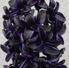 Hyacinthus Dark Dimension