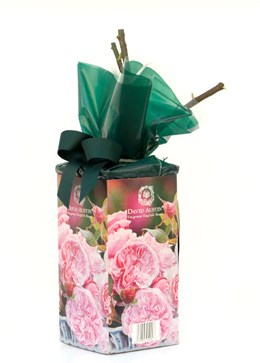 Rose Gift Pack 'Gentle Hermione' ('Gentle Hermione' Gift Pack)
