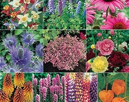 bumper perennial collection