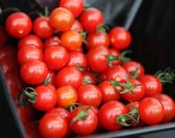 Tomato 'Sweet Aperitif' (cherry tomato)
