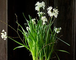 Ceramic pot with paperwhites (Ceramic pot with paperwhites)