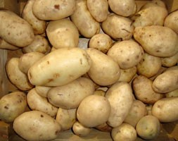 potato 'Majestic' (potato - maincrop, Scottish basic seed potato)