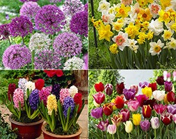 spring bulb collection